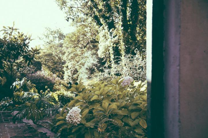 Arboreto Lussich 1_12