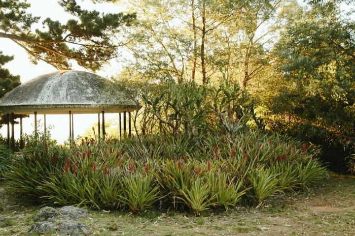 Arboreto Lussich 1_20