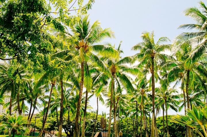 Oahu1_7