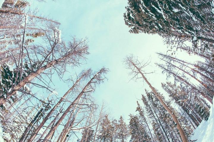 woodland1_4