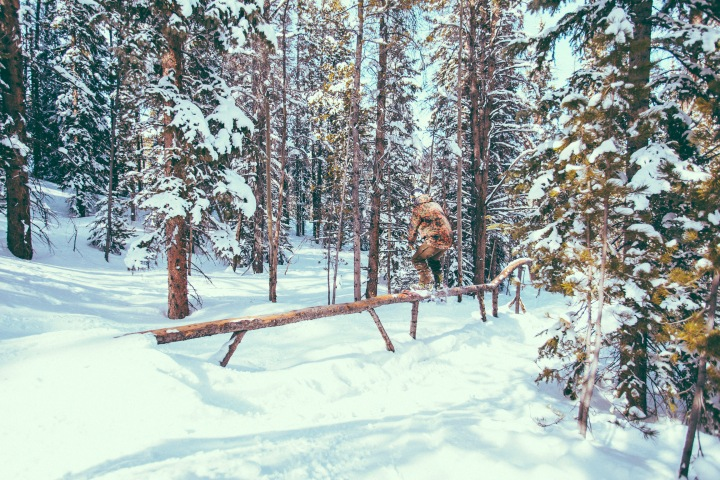 woodland1_9