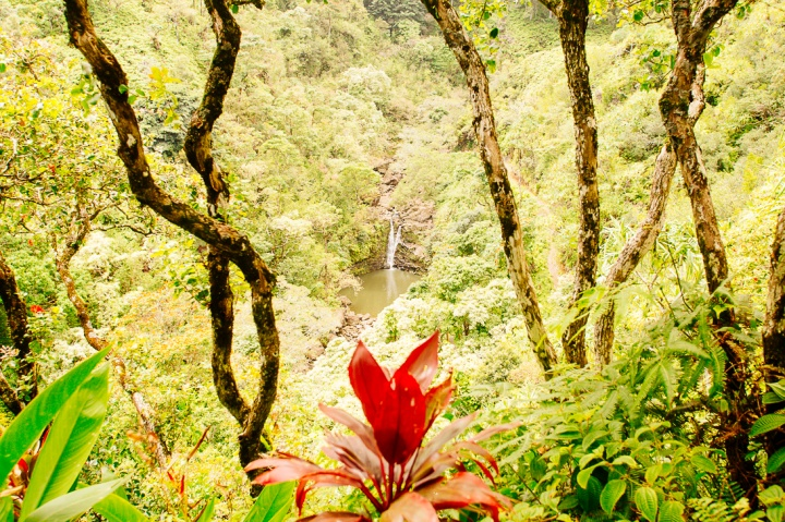 Road to Hana1_29