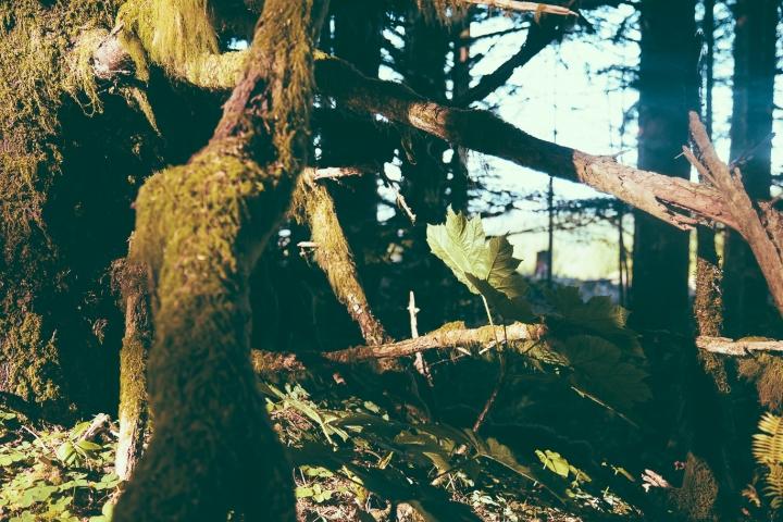 Hummer Oregon _Scandinavian_20