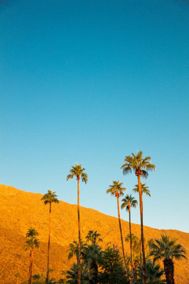 Palm_Springs_Blog (13 of 31)