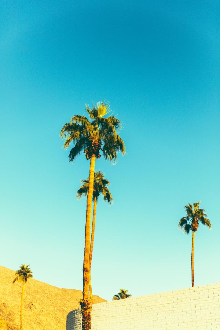 Palm_Springs_Blog (17 of 31)