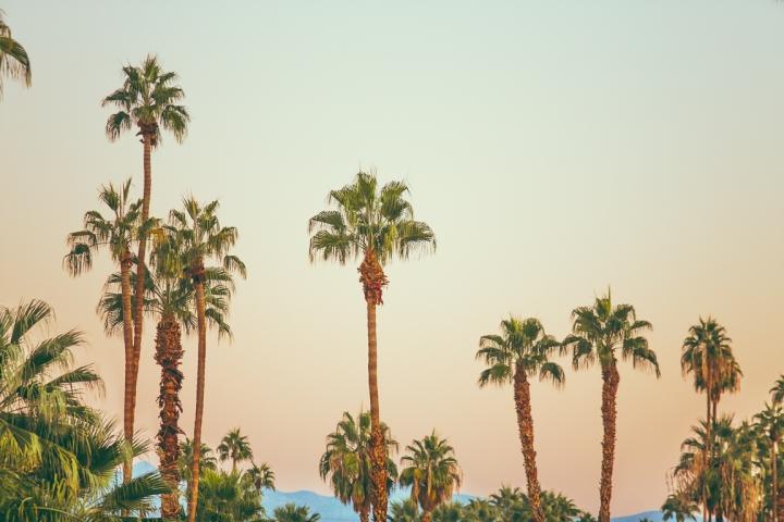 Palm_Springs_Blog (24 of 31)